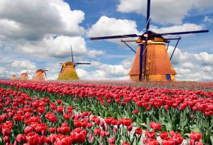 Tulpenblüte Holland